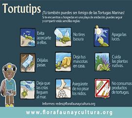 Campaña Tortutips 2018