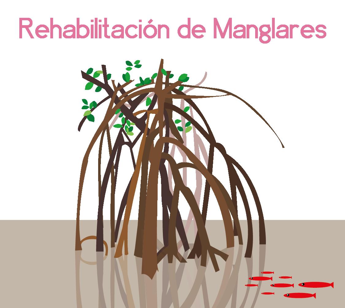 Rehabilitación de Manglares en Quintana Roo