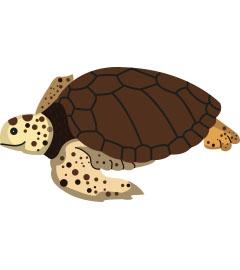 Inicio Temporada de Anidación de Tortugas Marinas  2017