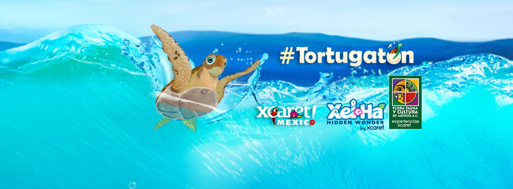 Inicia Campaña Tortugatón